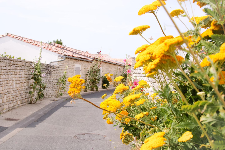 Elodie-Blog-ile-de-re_fleurs-jaunes