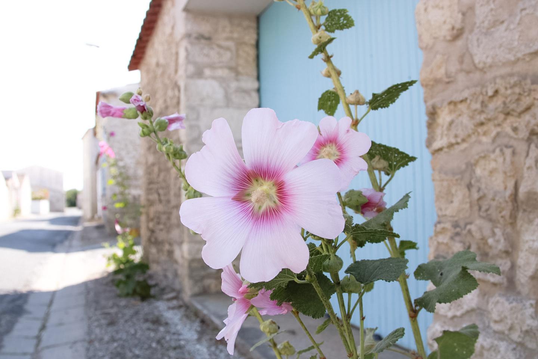 Elodie-Blog-village-arceau-rose tremiere
