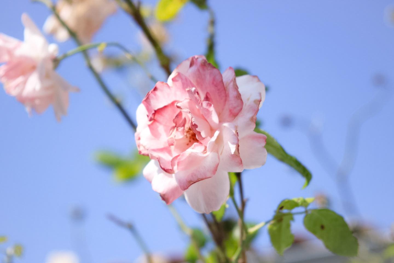 Elodie-Blog-village-arceau-rose