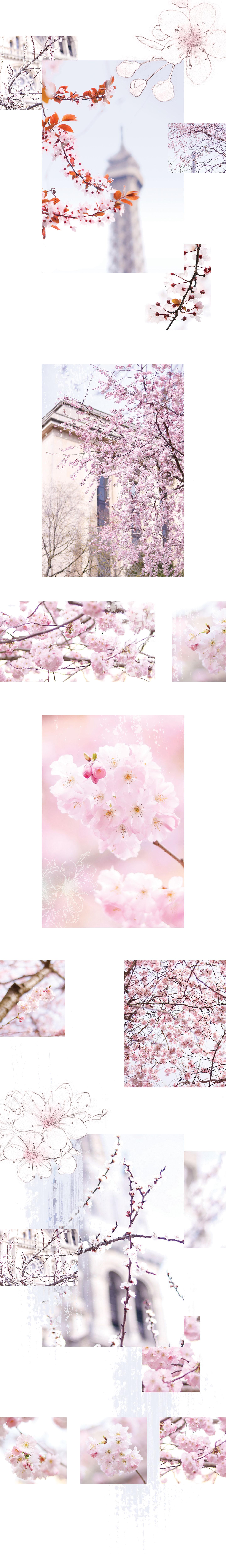Le Printemps à Paris |S'il y a bien un événement que j'attends chaque année avec impatience, c'est l'arrivée du printemps à Paris. Dès que le mois de mars pointe son nez, j'adore guetter les premiers signes du réveil de la nature, et les premiers bourgeons dans les arbres… - Cliquez pour découvrir l'article