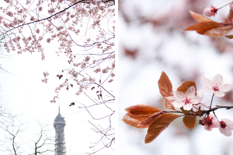 le guide pratique des arbres en fleurs paris lodie. Black Bedroom Furniture Sets. Home Design Ideas