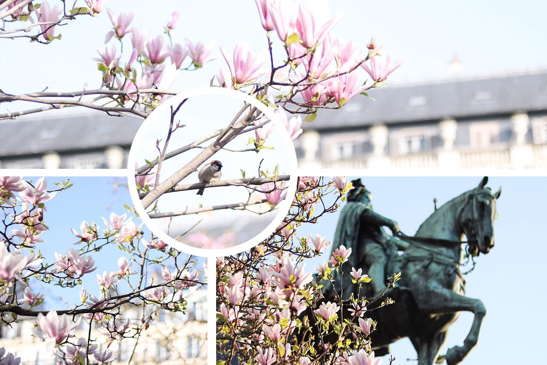 Où et quand admirer les arbres en fleurs à Paris au printemps ? Dès février et jusqu'à fin avril, partez à la découverte des arbres fleuris. - Cliquez pour découvrir l'article