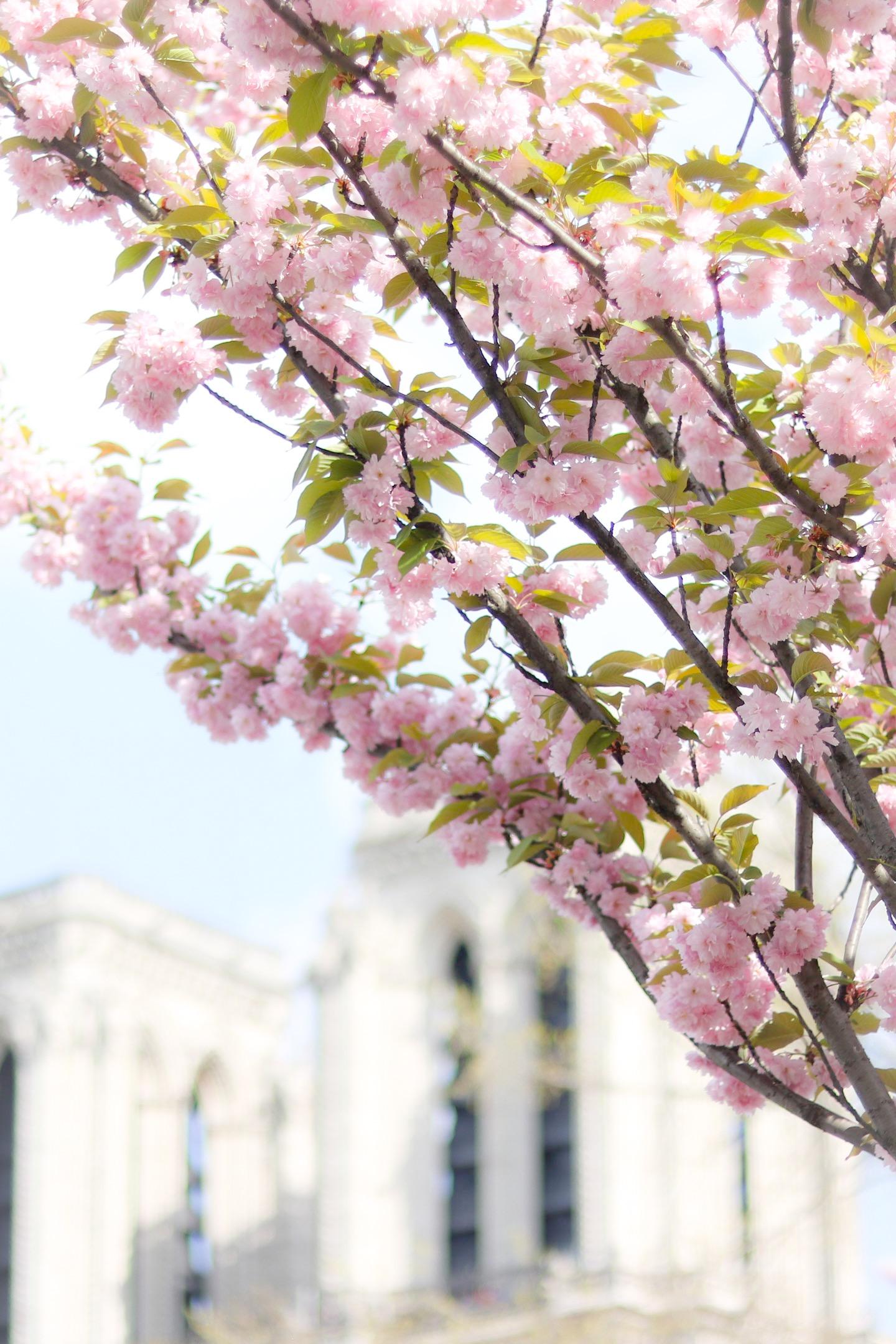 Le guide pratique des arbres en fleurs paris lodie for Ou acheter des fleurs